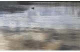 171361 WANAKA 6, 25х40 (декор бежевый: пейзаж/природа)